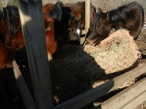 Round Bale Hay Net Feeder